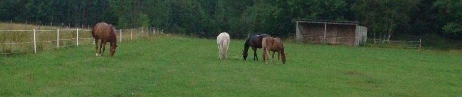 Sommarbete för hästarna