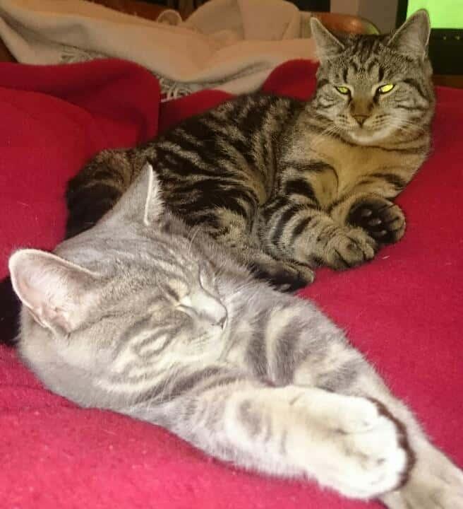 Katterna 2