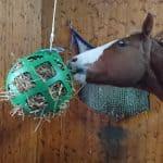 För häst på boxvila eller sjukhage